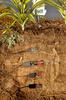 ECH2O土壤含水量监测系统