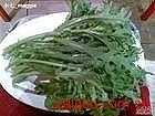 茼蒿子提取物  茼蒿提取物 打某菜提取物 春菊提取物 茼蒿菜提取物