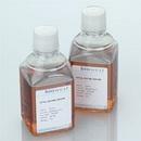 B1小鼠抗伏马菌素B1/MonoclonalMouseAnti-Fumonisin