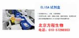 Western印迹技术服务