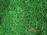 人造草坪 人造草 人造草皮
