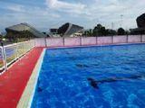 臥龍牌全鋼機構拆裝式游泳池