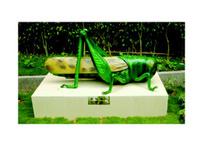 节肢动物(蝗虫1)