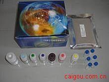 人甲胺喋呤(MTX)ELISA试剂盒