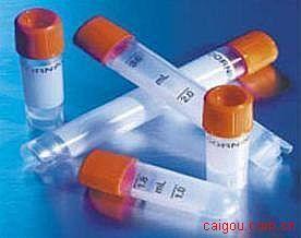 钾通道四聚结构域4(KCTD4)单抗