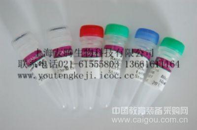 人骨形成蛋白(BMPs)ELISA Kit