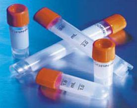 抗体多巴胺受体-D4抗体