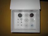 抗网硬蛋白抗体ELISA试剂盒厂家代测,进口人(ARA)ELISA Kit说明书