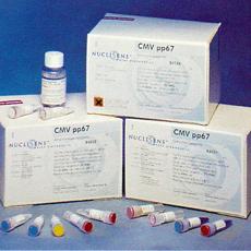 人泛素蛋白(Ub)ELISA试剂盒