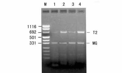 中科院细胞库供应 各种细胞株株