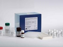 大鼠血管内皮细胞生长因子(VEGF)ELISA试剂盒