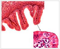 组织胚胎学切片