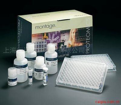 人白介素1β转换酶ELISA试剂盒