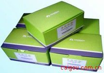 Plant DNA Maxi Kit