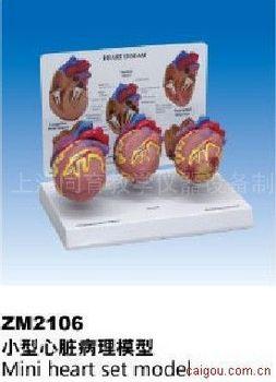 小型心脏病理模型