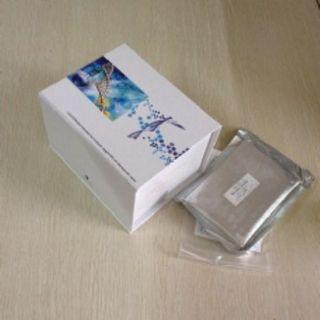 通用转录因子ⅡH肽1(GTF2H1)检测试剂盒(酶联免疫吸附试验法)