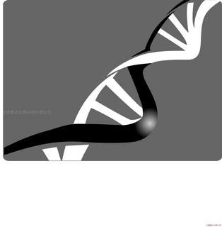碧波TUNEL细胞凋亡检测试剂盒(显色法)(冰冻切片专用)