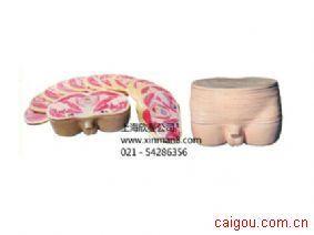 男性盆部横断断层解剖模型,男性盆部断层模型
