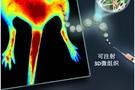 清华生物医学工程系开发出可注射组织再生新技术