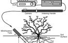 根系生态监测系统在中国医学科学院药用植物研究所投入运行