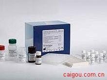 小鼠ATGA/TGAB,抗甲状腺球蛋白抗体Elisa试剂盒