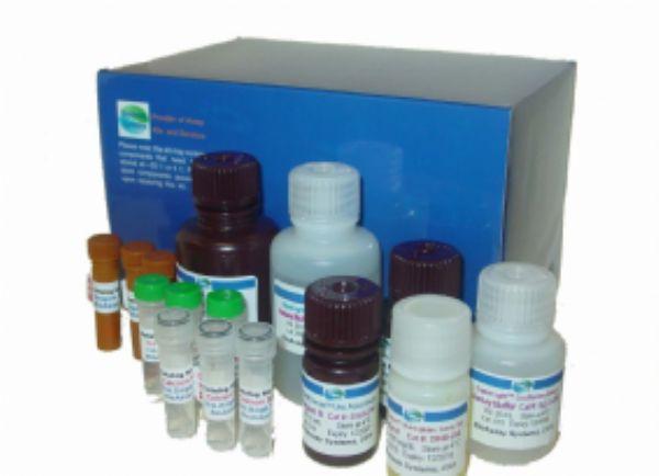 人正常T细胞表达和分泌因子(RANTES/CCL5)ELISA试剂盒 规格