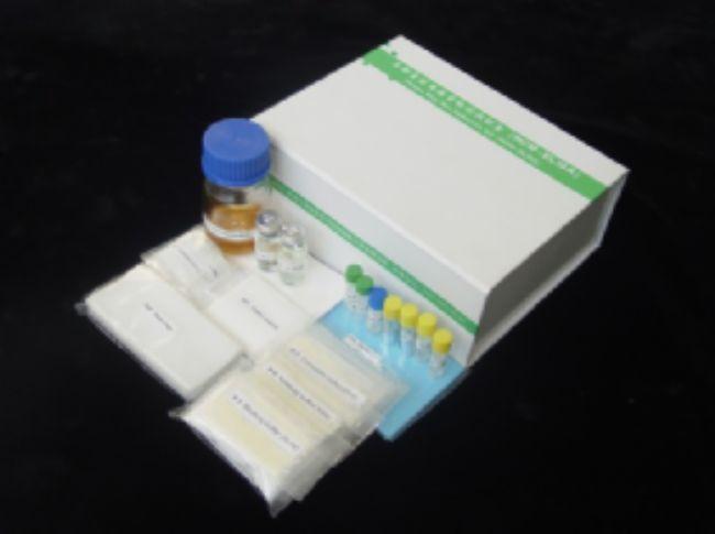 大鼠趋化因子(FK)ELISA试剂盒