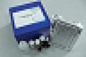 待测大鼠细胞色素C(Cyt-C)ELISA试剂盒价格