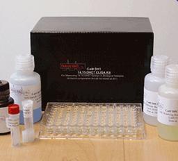 人抗中性粒细胞核周抗体(pANCA)ELISA Kit